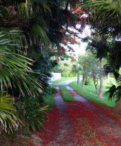 Harvest Lane Meanderings